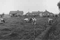 Datering 1967. Het bungalow-park in Venhorst